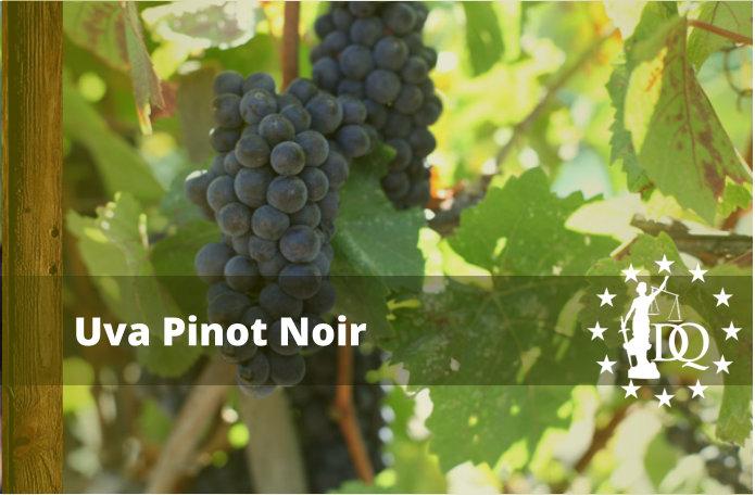 Características Vino Pinot Noir