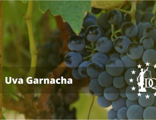 Características Vino Garnacha | Master en Enología Online