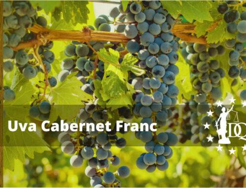Características Vino Cabernet Franc | Master en Enología Online